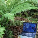 A laptop in the woods, waiting for a writer.