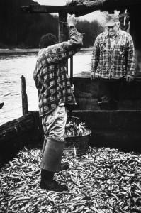 Two men shovel fish for making ooligan